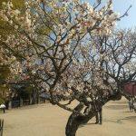 昨日はドライブ日和。松山城まで行ってきた。ここまで走ると電気だけでは走らない。