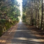 トヨタは田舎を森を大事にすれば良い。レースばかりしてるのでもなく都会だけ相手にでも無く。